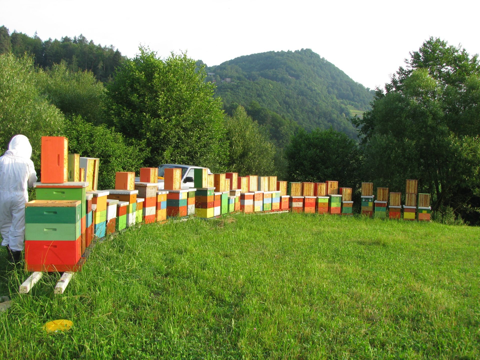 Apis_m_carnica_honey_slovenia