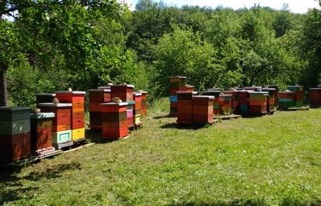 Apis_m_carnica_hives-003-authentic-apis-mellifera-carnica