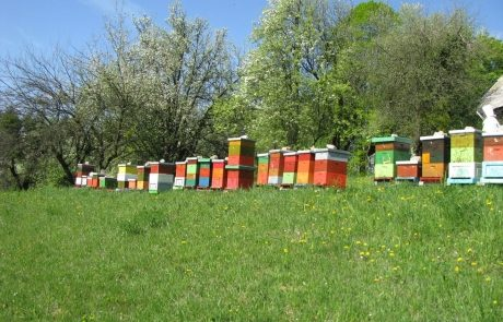 Apis_m_carnica_hives-005-authentic-apis-mellifera-carnica