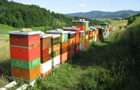 Apis_m_carnica_hives-007-authentic-apis-mellifera-carnica