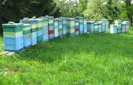 Apis_m_carnica_hives-012-authentic-apis-mellifera-carnica