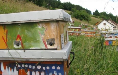 Apis_m_carnica_hives-014-authentic-apis-mellifera-carnica