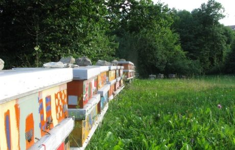 Apis_m_carnica_hives-015-authentic-apis-mellifera-carnica