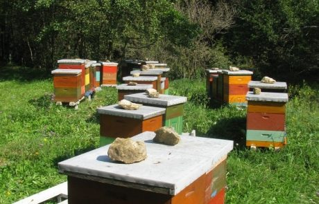 Apis_m_carnica_hives-016-authentic-apis-mellifera-carnica