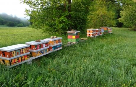 Apis_m_carnica_hives-020-authentic-apis-mellifera-carnica
