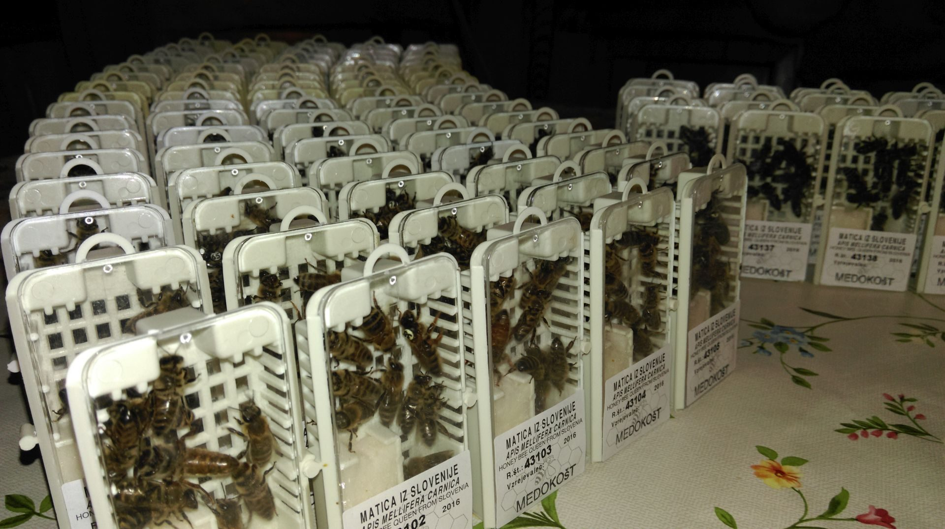 Mating conditions-001-authentic-apis-m-carnica