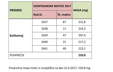 masa-matic-2017-apis-m-carnica Breeding quality03